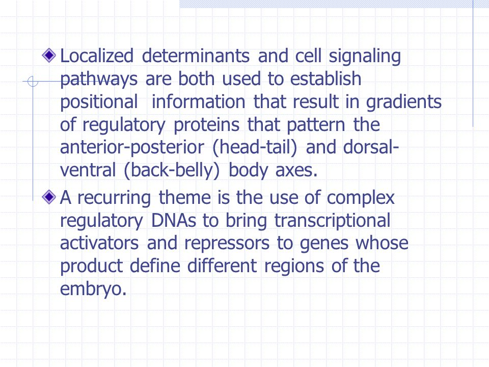 Localized determinants and cell signaling pathways are both used to establish positional information that result in gradients of regulatory proteins that pattern the anterior-posterior (head-tail) and dorsal-ventral (back-belly) body axes.