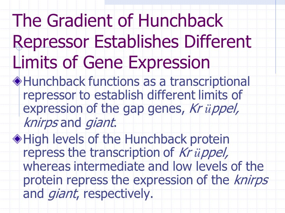 The Gradient of Hunchback Repressor Establishes Different Limits of Gene Expression