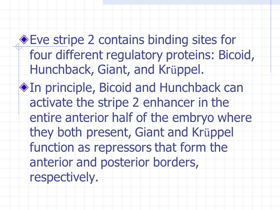 Eve stripe 2 contains binding sites for four different regulatory proteins: Bicoid, Hunchback, Giant, and Krüppel.