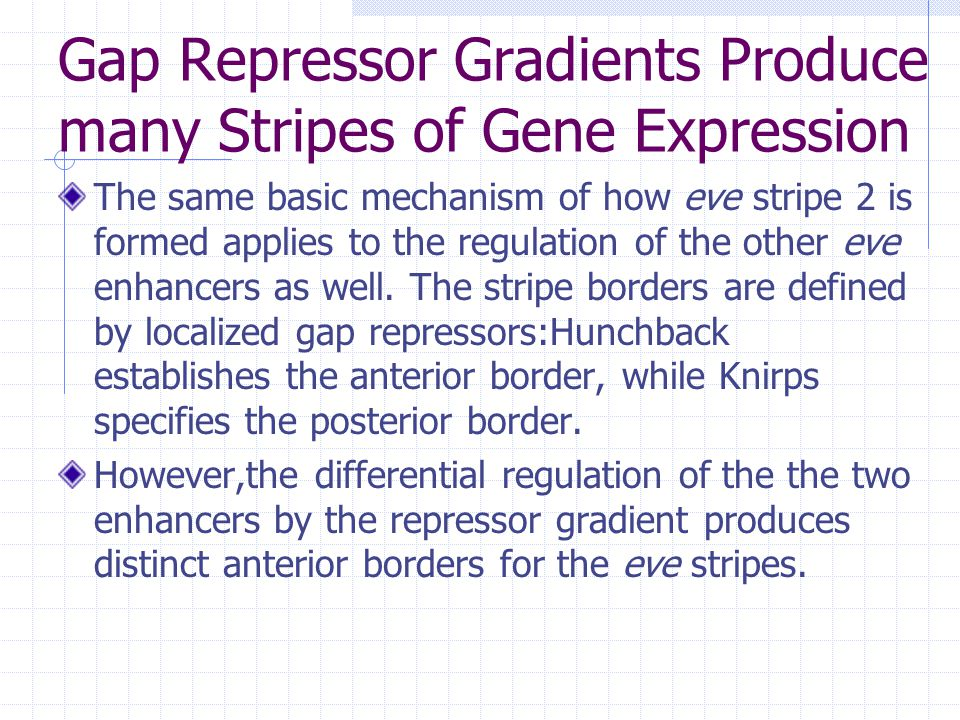 Gap Repressor Gradients Produce many Stripes of Gene Expression