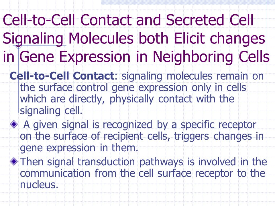 Cell-to-Cell Contact and Secreted Cell Signaling Molecules both Elicit changes in Gene Expression in Neighboring Cells