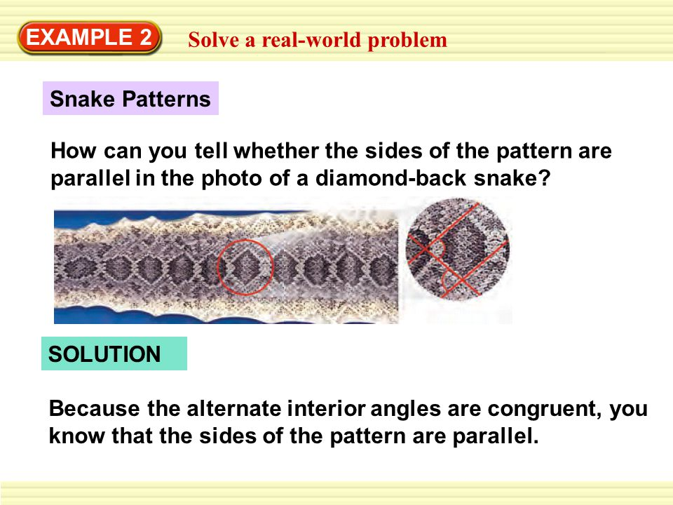 EXAMPLE 2 Solve a real-world problem. Snake Patterns.