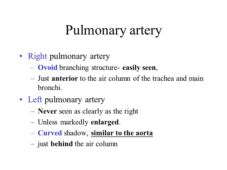 Pulmonary artery Right pulmonary artery Left pulmonary artery