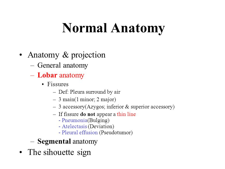Normal Anatomy Anatomy & projection The sihouette sign General anatomy