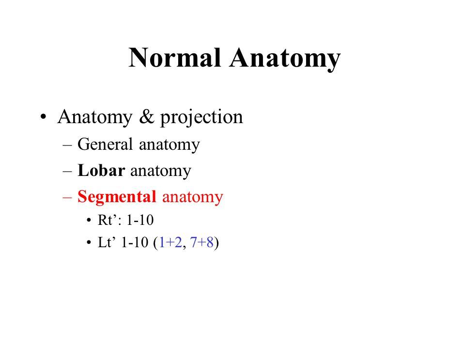 Normal Anatomy Anatomy & projection General anatomy Lobar anatomy
