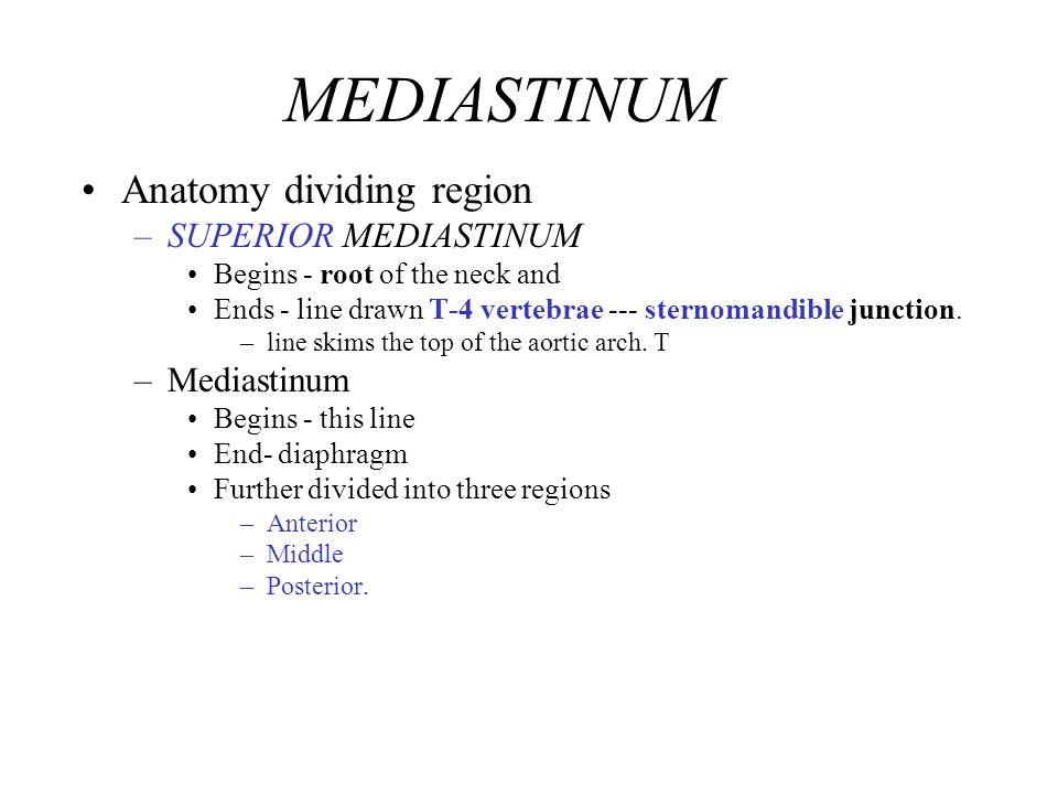 MEDIASTINUM Anatomy dividing region SUPERIOR MEDIASTINUM Mediastinum