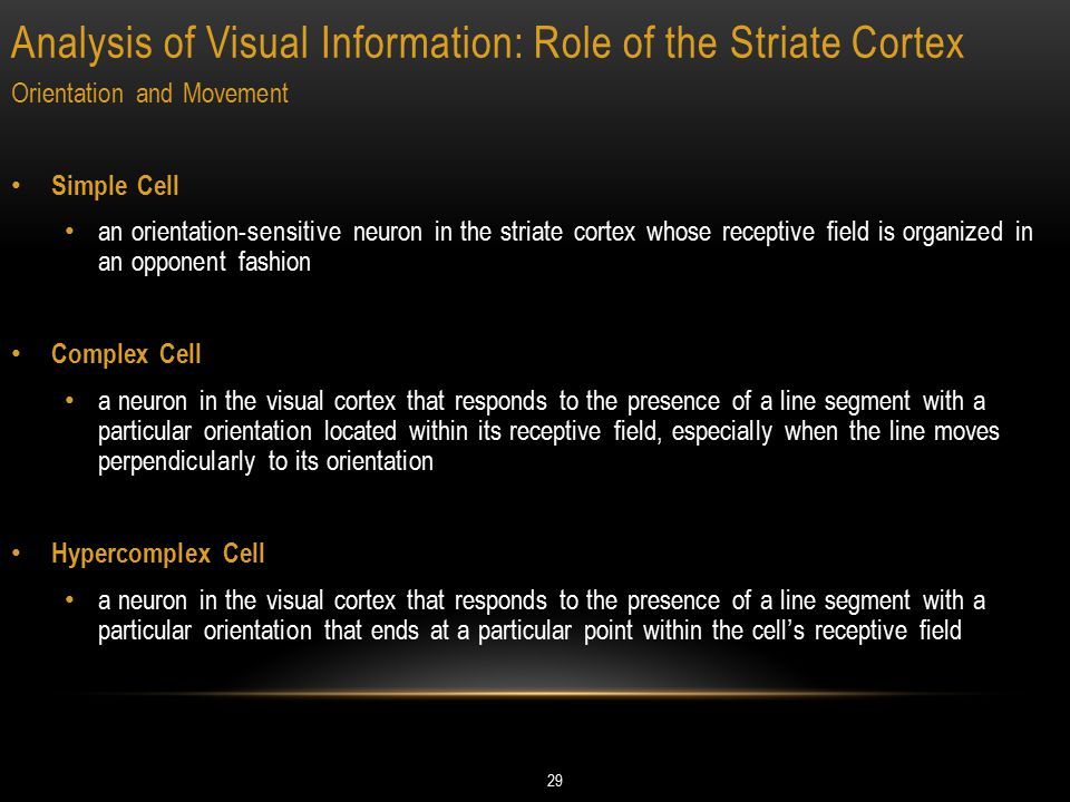 Analysis of Visual Information: Role of the Striate Cortex