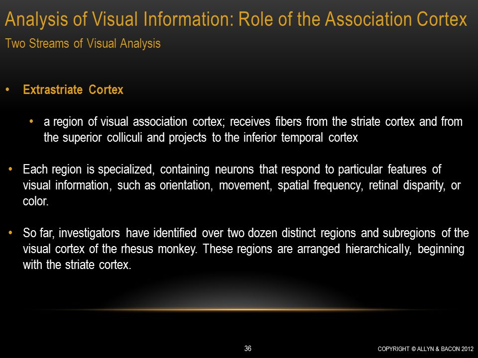 Analysis of Visual Information: Role of the Association Cortex