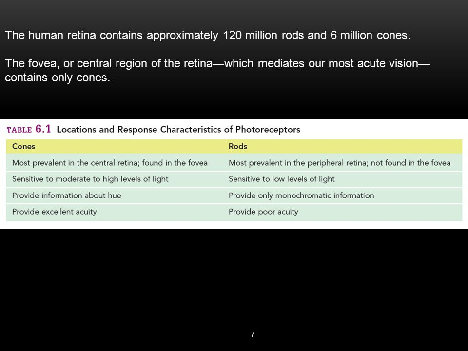 The human retina contains approximately 120 million rods and 6 million cones.