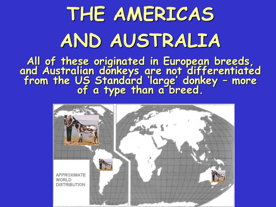 THE AMERICAS AND AUSTRALIA