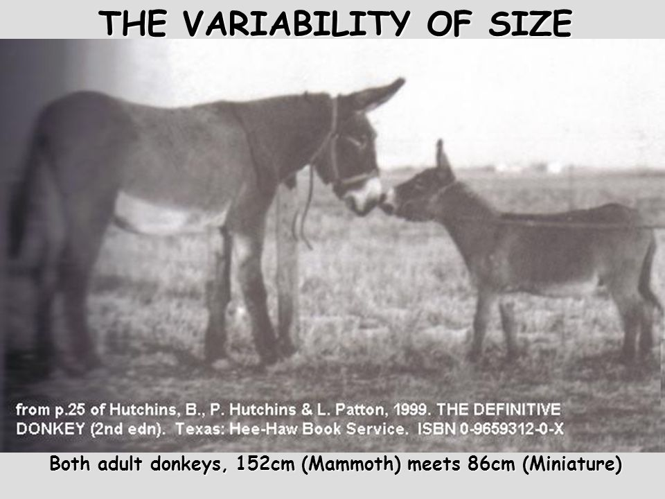 THE VARIABILITY OF SIZE