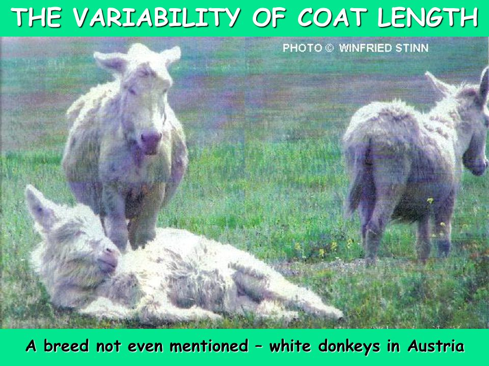 THE VARIABILITY OF COAT LENGTH