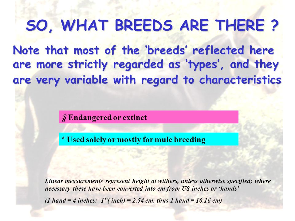 SO, WHAT BREEDS ARE THERE