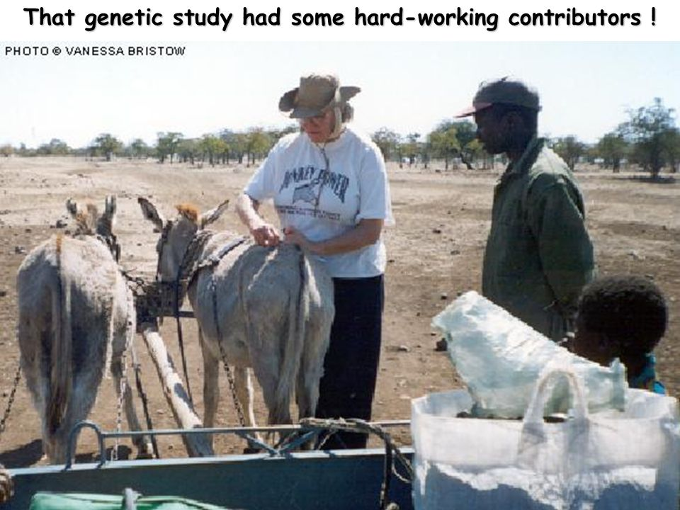 That genetic study had some hard-working contributors !
