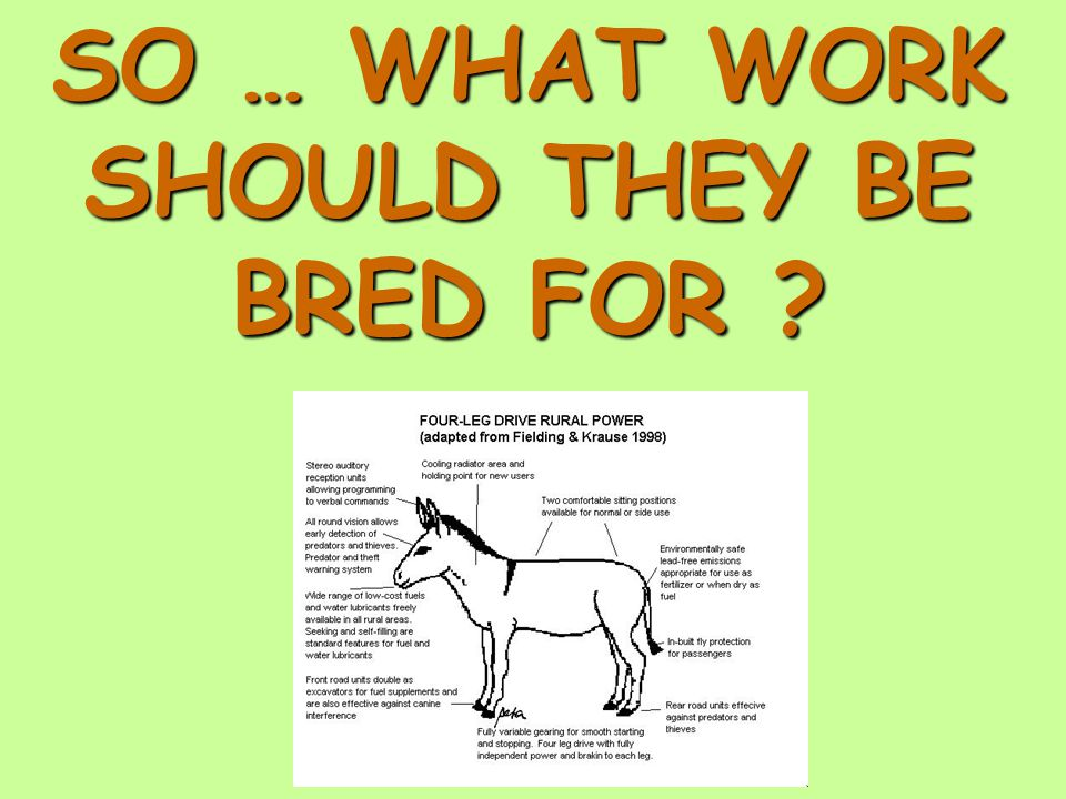 SO … WHAT WORK SHOULD THEY BE BRED FOR