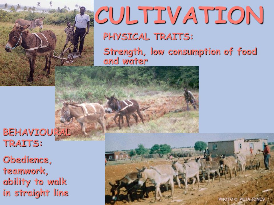 CULTIVATION PHYSICAL TRAITS:
