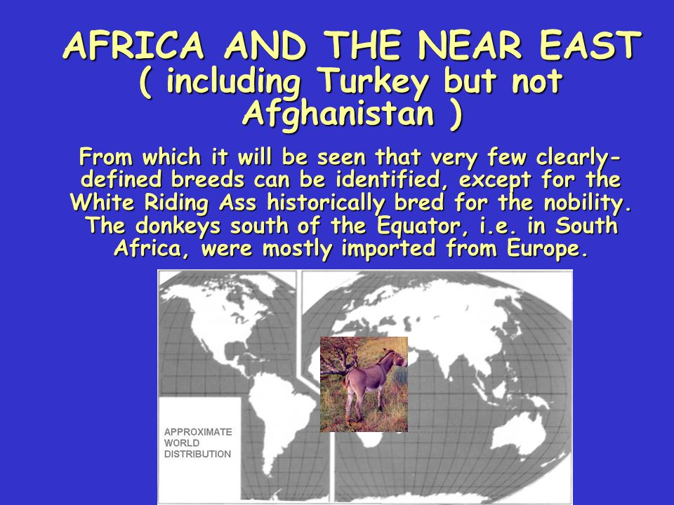 AFRICA AND THE NEAR EAST ( including Turkey but not Afghanistan )