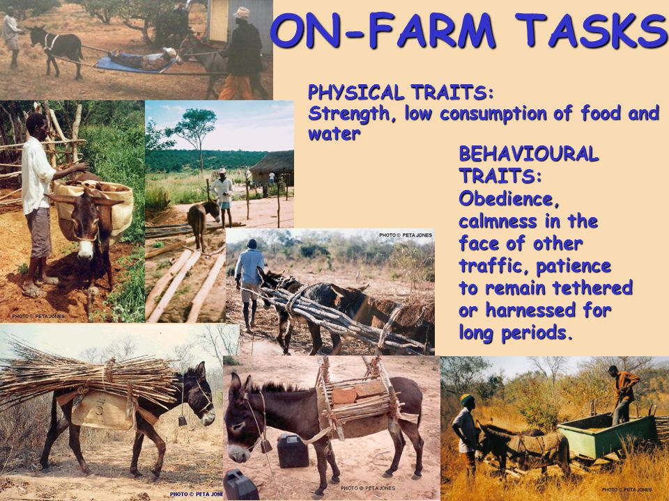 ON-FARM TASKS PHYSICAL TRAITS: