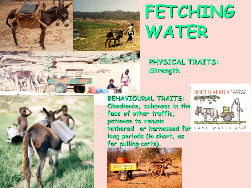FETCHING WATER PHYSICAL TRAITS: Strength