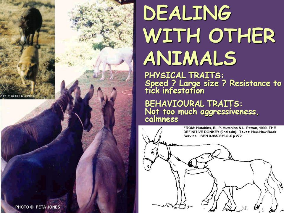 DEALING WITH OTHER ANIMALS