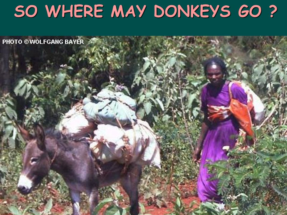 SO WHERE MAY DONKEYS GO