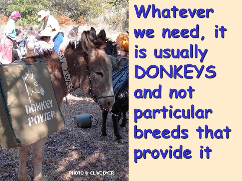 Whatever we need, it is usually DONKEYS and not particular breeds that provide it