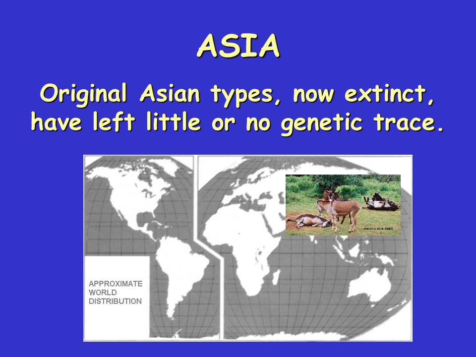 ASIA Original Asian types, now extinct, have left little or no genetic trace.