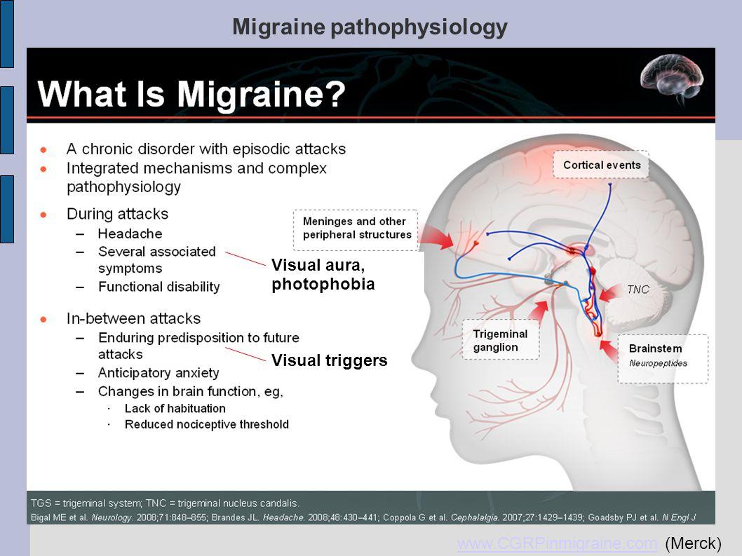 Migraine pathophysiology- cortical excitability