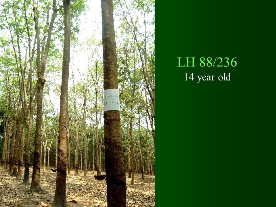 LH 88/236 14 year old