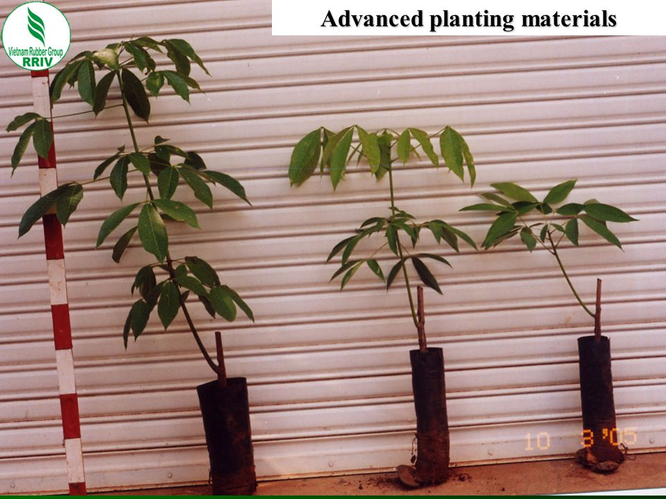 Advanced planting materials