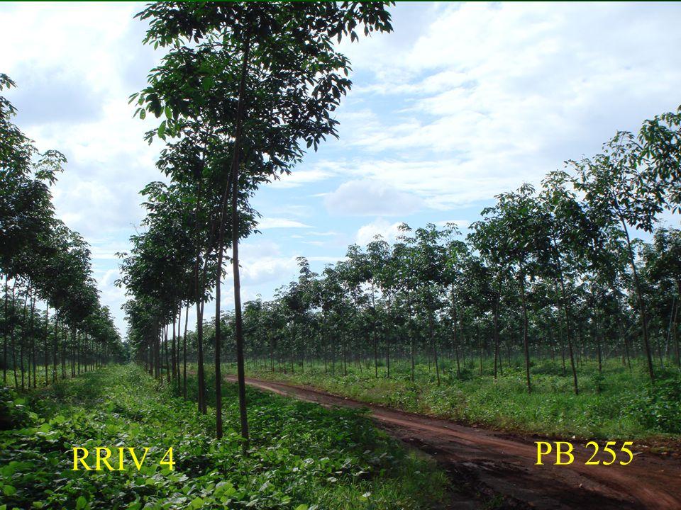 PB 255 RRIV 4