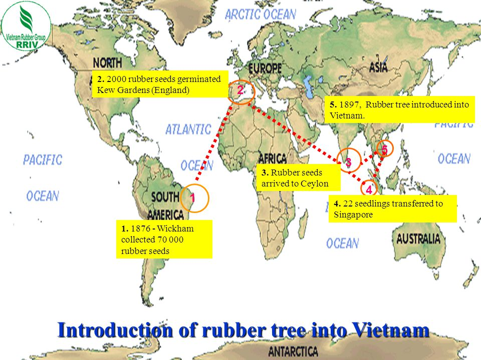 Introduction of rubber tree into Vietnam
