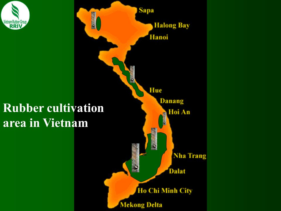 Rubber cultivation area in Vietnam