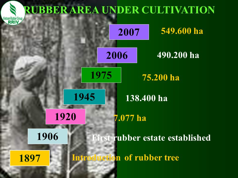 RUBBER AREA UNDER CULTIVATION