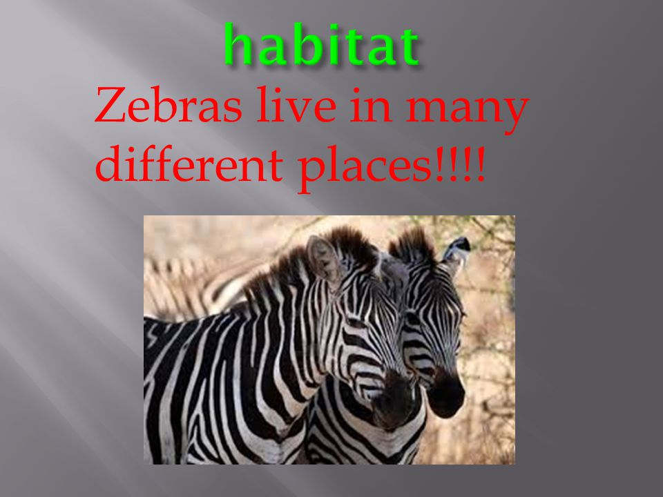 habitat Zebras live in many different places!!!!
