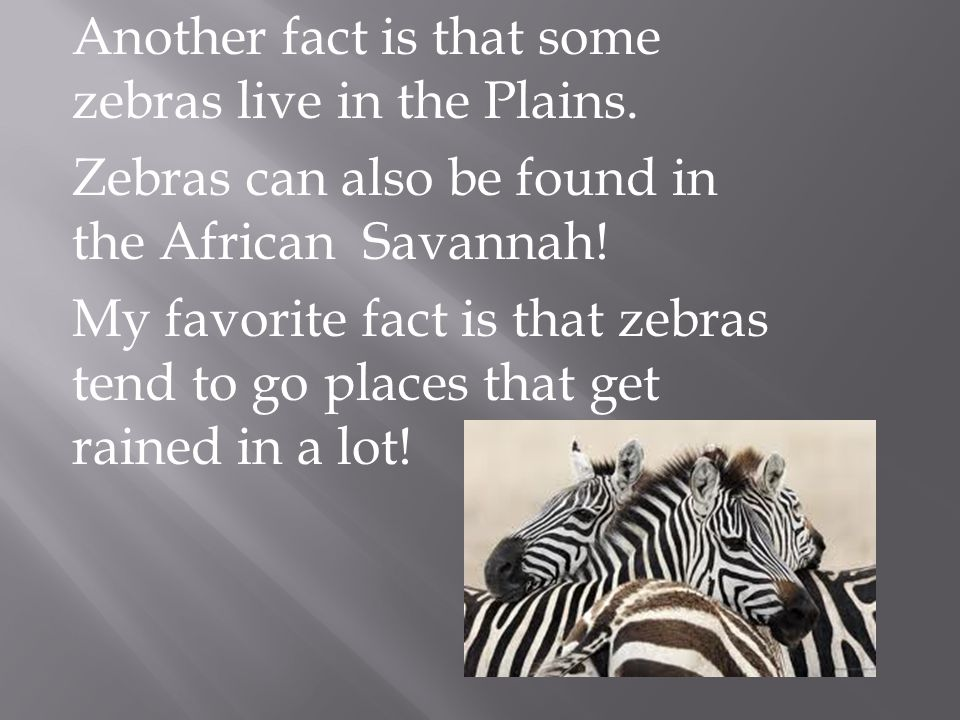 Another fact is that some zebras live in the Plains