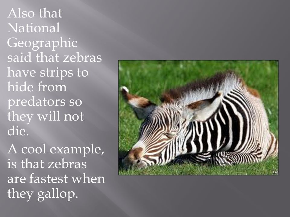 Also that National Geographic said that zebras have strips to hide from predators so they will not die.