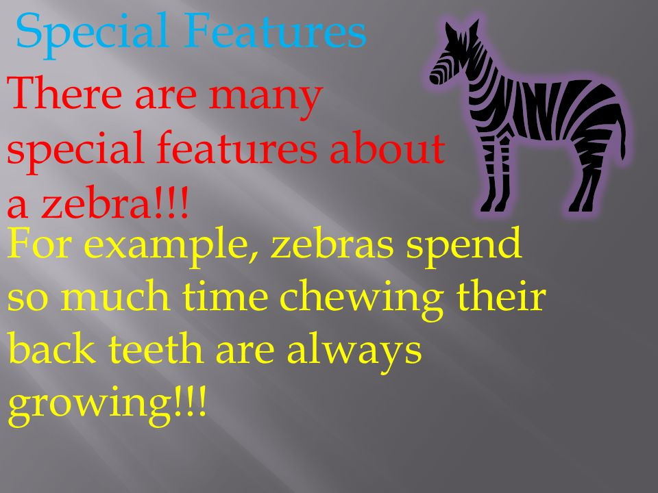 Special Features There are many special features about a zebra!!!