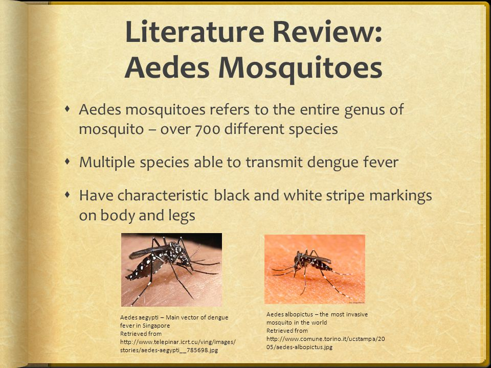 Literature Review: Aedes Mosquitoes