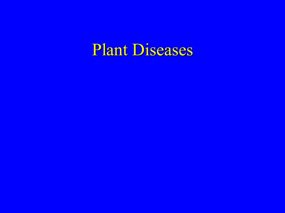 Plant Diseases Did not include Hawthorne leaf blight, mosaic, or Rhabdocline leaf cast