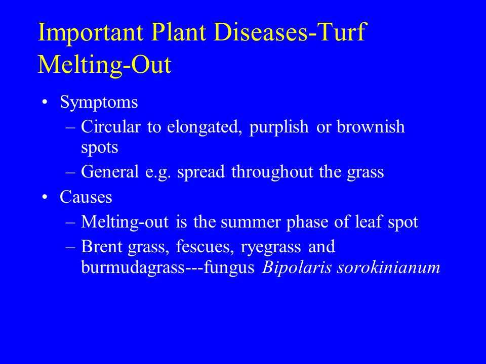 Important Plant Diseases-Turf Melting-Out