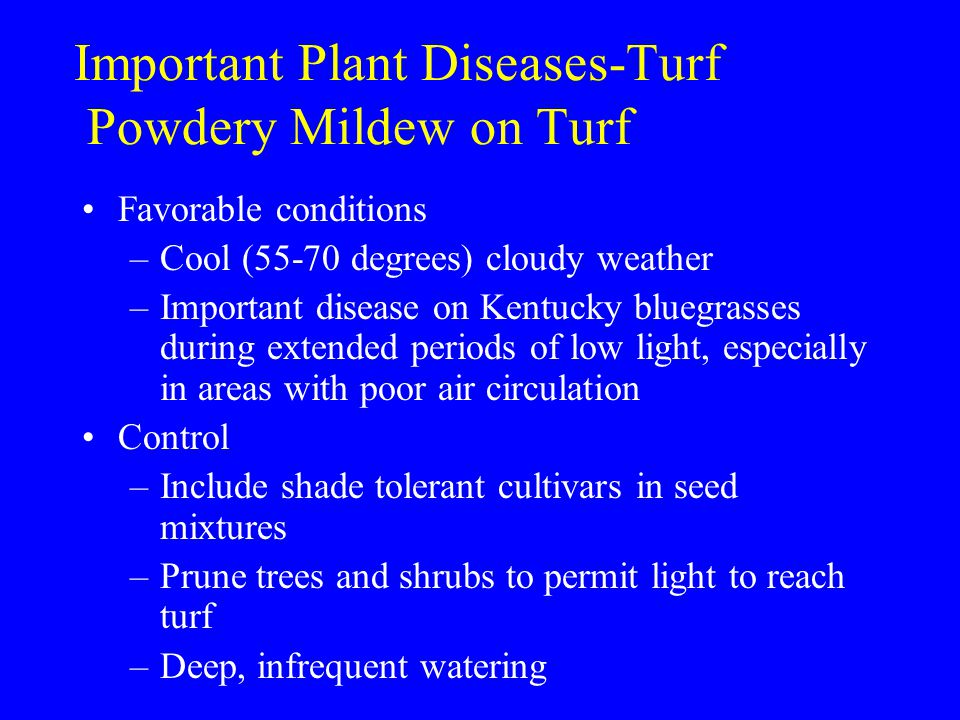 Important Plant Diseases-Turf Powdery Mildew on Turf