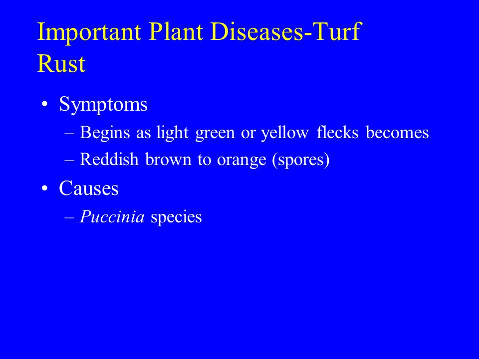 Important Plant Diseases-Turf Rust