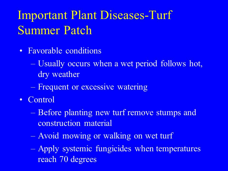 Important Plant Diseases-Turf Summer Patch