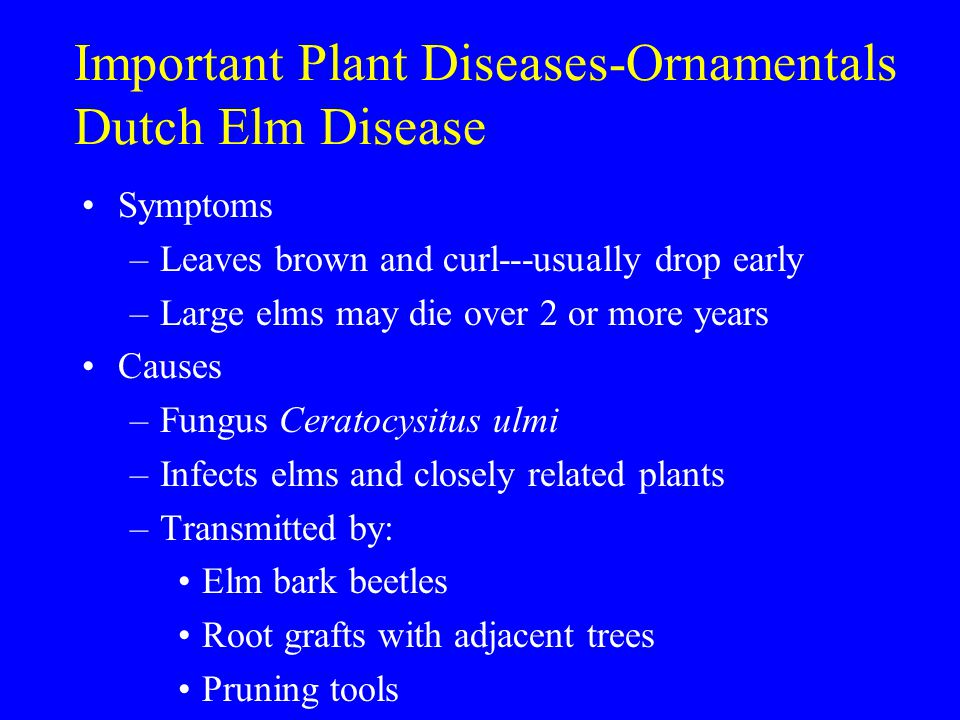 Important Plant Diseases-Ornamentals Dutch Elm Disease