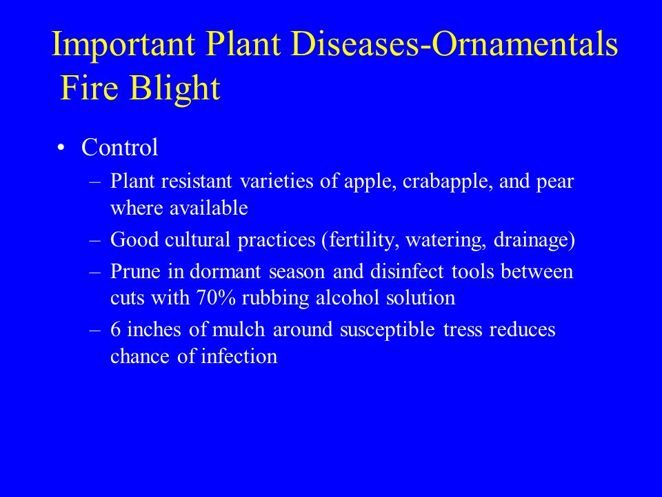 Important Plant Diseases-Ornamentals Fire Blight