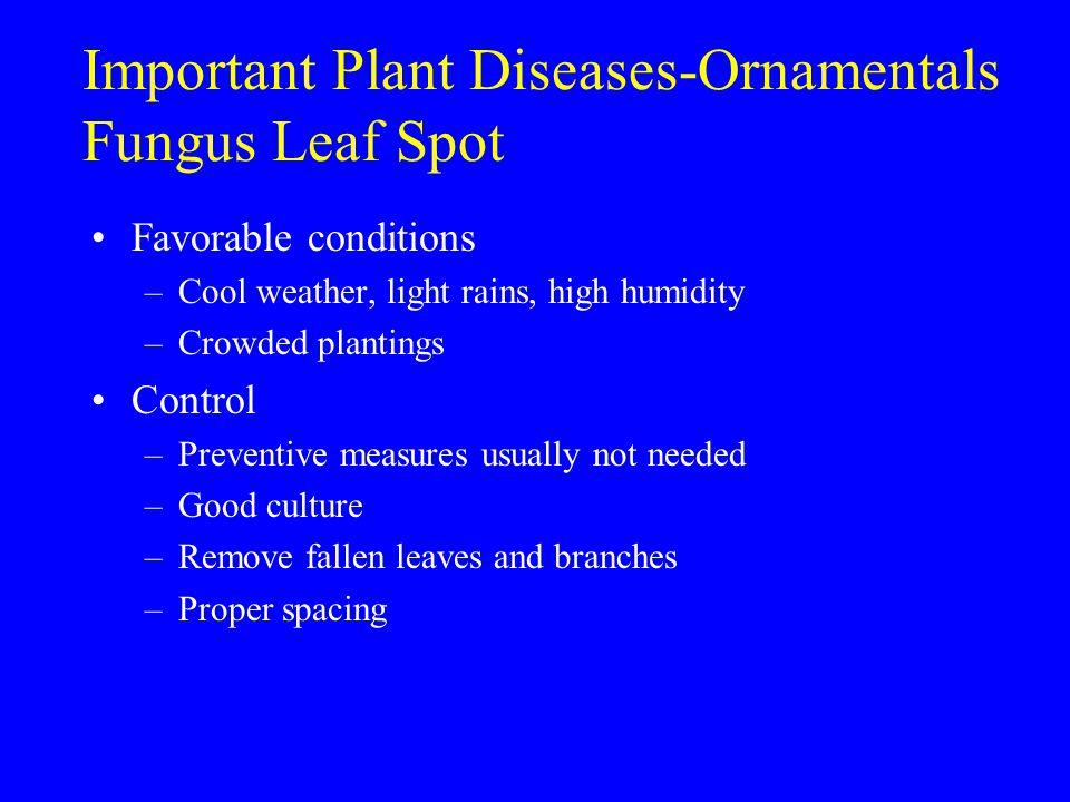 Important Plant Diseases-Ornamentals Fungus Leaf Spot