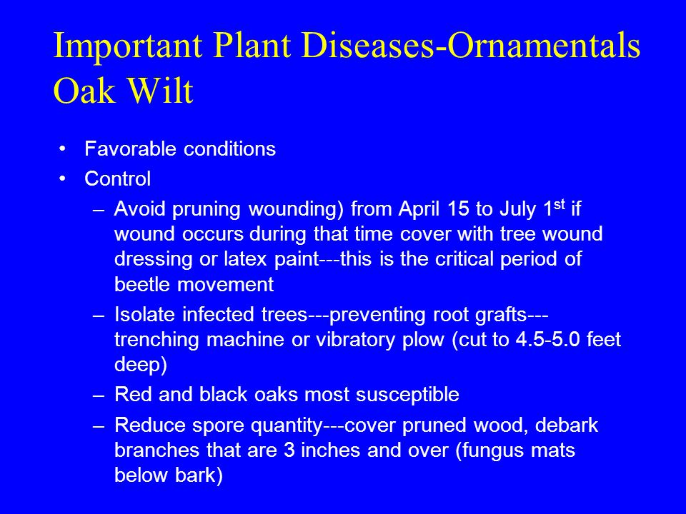 Important Plant Diseases-Ornamentals Oak Wilt