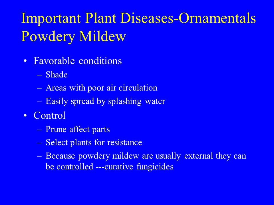 Important Plant Diseases-Ornamentals Powdery Mildew