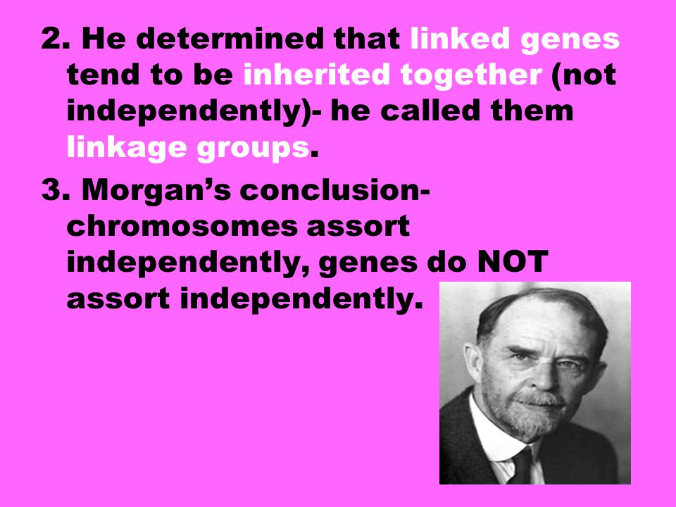 2. He determined that linked genes tend to be inherited together (not independently)- he called them linkage groups.